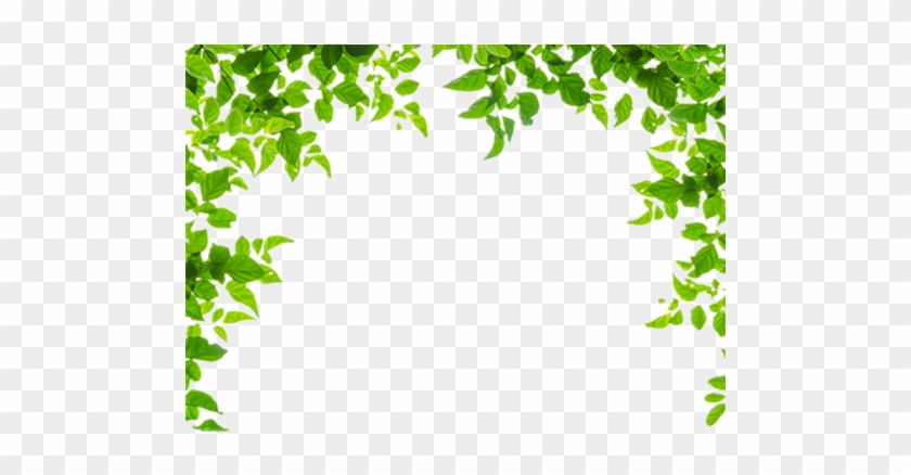 And Leaf Leaves Green Frames Borders Border Clipart - Green Leaves Border Png Transparent Png #933276