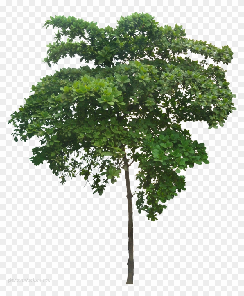 Plant Images, Plant Pictures, Arbre Png, Tree Render, - Small Tree Png Clipart #958746
